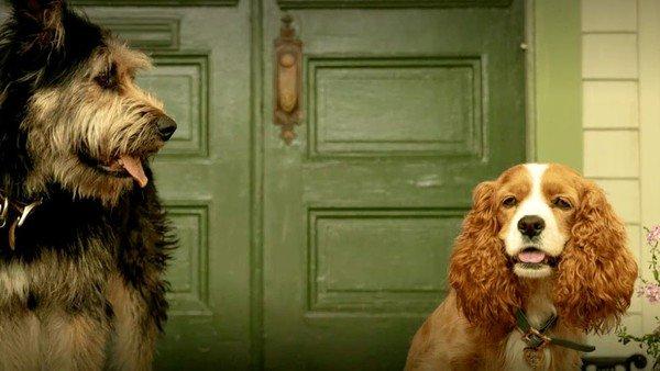 Cómo será la remake de La dama y el vagabundo que prepara Disney: perros de carne y hueso