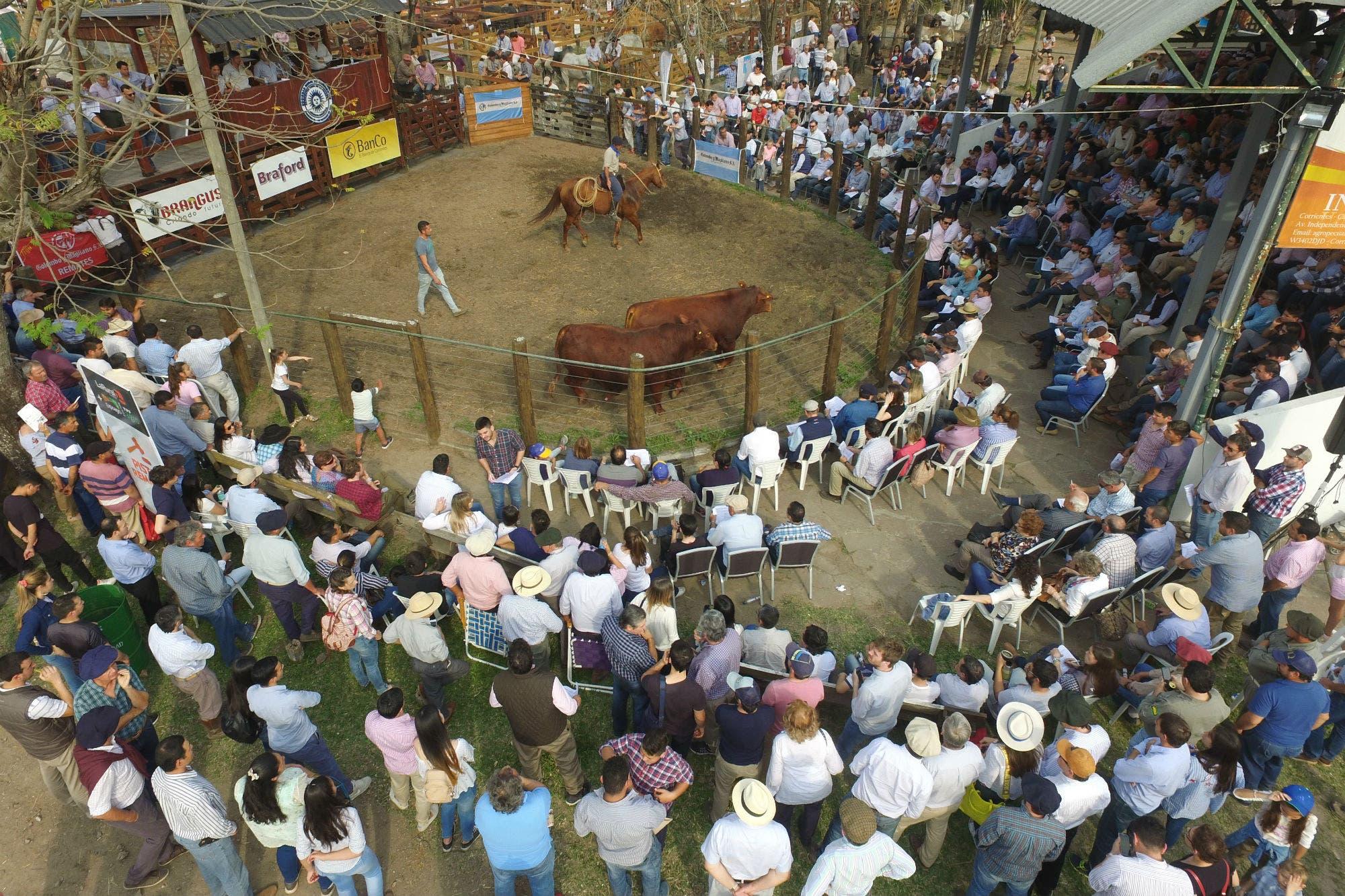 Expoagro en Corrientes. Buenos precios para los reproductores pese a la incertidumbre económica